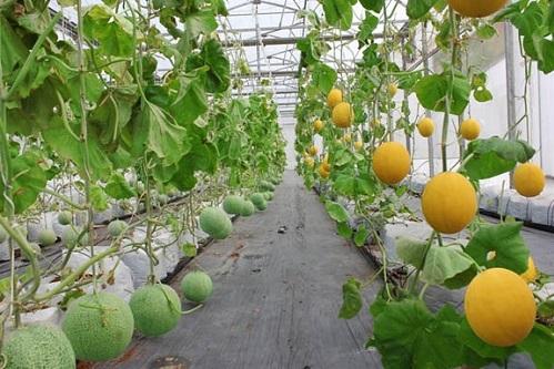 Các nông trại được gắn cảm biến để đo lường chỉ số và nhận điều khiển từ xa.