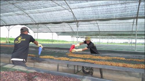 Công ty Vĩnh Hiệp phát triển cà phê hữu cơ