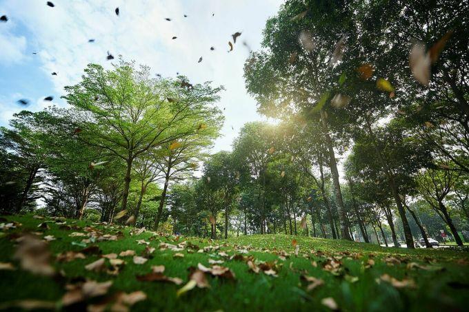 Sống hoà mình với thiên nhiên giúp cư dân cảm thấy thư thái hơn, tăng khả năng sáng tạo và cảm giác hạnh phúc mỗi ngày.
