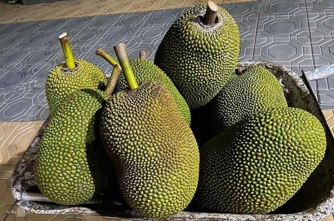 Giá mít Thái giảm còn vài nghìn đồng một kg