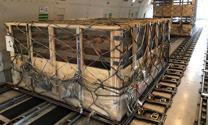 Lợn nằm trong thùng gỗ, được đặt trong bụng máy bay chở hàng. Ảnh: Bloomberg