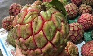Vài trăm nghìn một trái na rừng 'khổng lồ'
