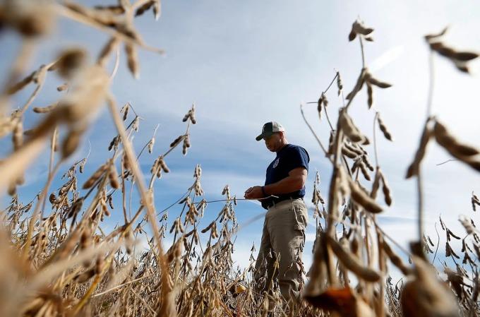 Nông dân Mỹ trên một cánh đồng đậu tương. Ảnh: Reuters