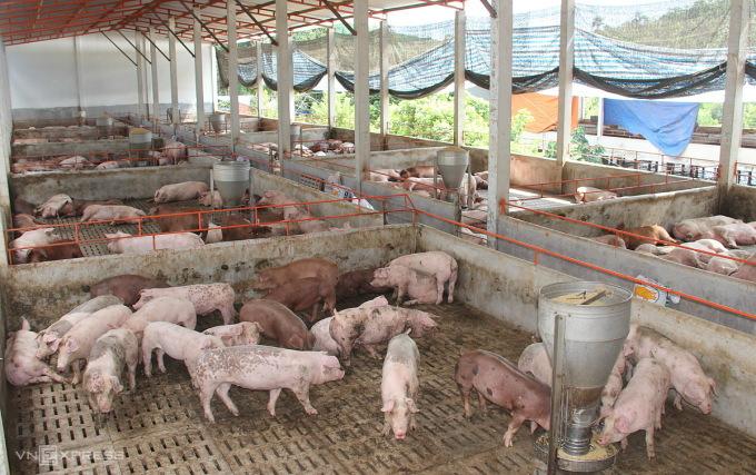 Trang trại nuôi heo tại Đồng Nai. Ảnh: Phước Tuấn.