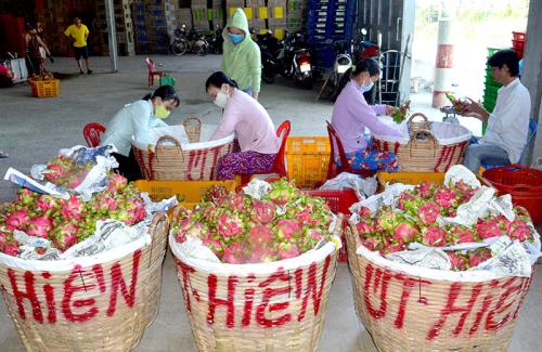 Nông sản Việt loay hoay nâng cao năng lực sản xuất