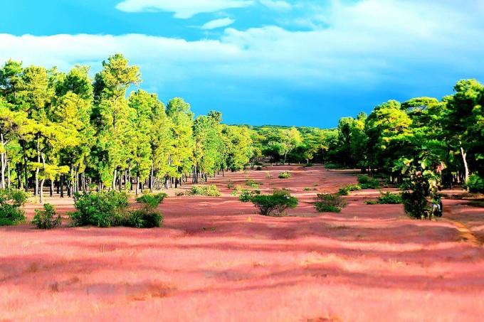 Đồi cỏ hồng - điểm khai thác du lịch đang được tái đầu tư.