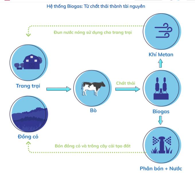 Sơ đồ hệ thống Biogas tại các trang trại bò sữa Vinamilk.