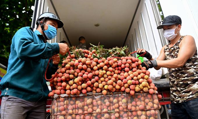 Nông dân Bắc Giang đưa vải thiều đi tiêu thụ. Ảnh: Giang Huy