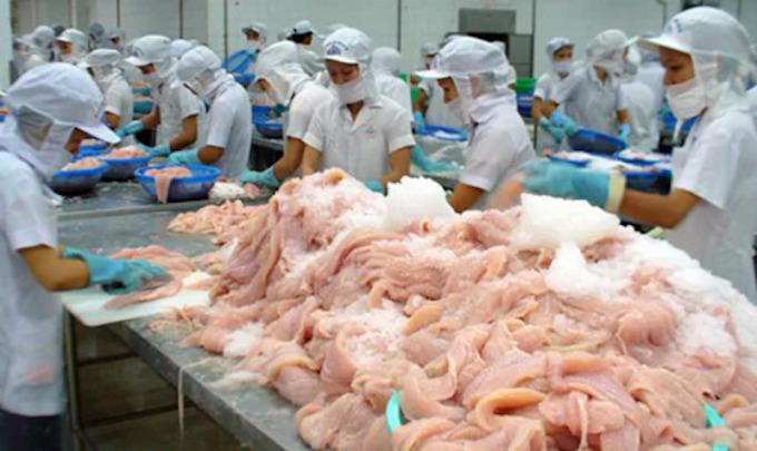 Sản xuất cá tra tại một doanh nghiệp chế biến ở miền Tây. Ảnh: Cửu Long