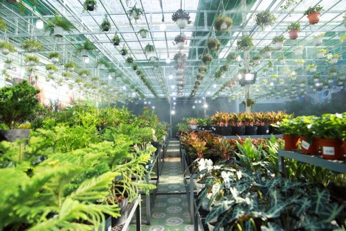 Hệ thống Siêu thị cây xanh mang về doanh thu đáng kể.