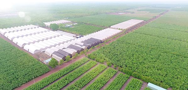 Khu nông nghiệp công nghệ cao An Thái. Ảnh: Báo Bình Dương