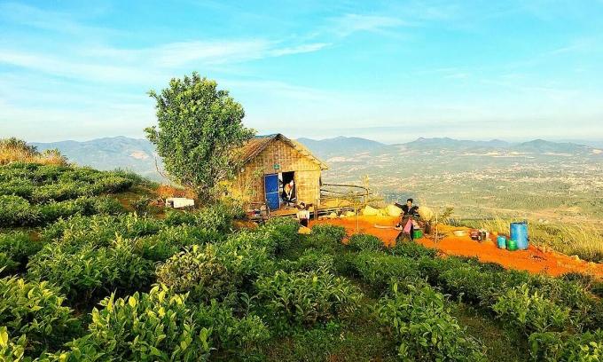 Căn nhà sàn bằng tre lợp lá được chủ đầu tư thuê người dân địa phương làm. Ảnh: Dỹ Tùng