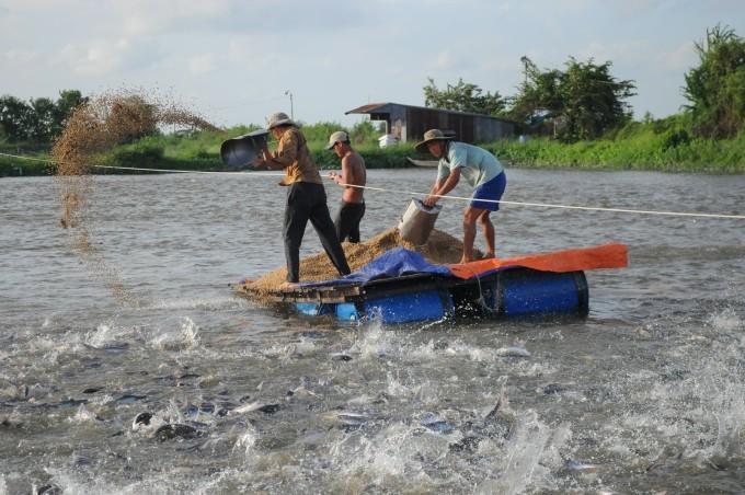 Người nuôi thủy sản khó khăn tìm mua thức ăn, thuốc men, con giống trong thời kỳ giãn cách xã hội. Ảnh: Vĩnh Phú.